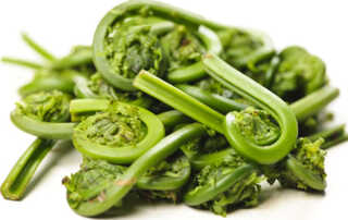 Fiddleheads green